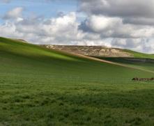 Продажа земли сельхозназначения